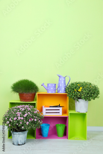 Flowers in pots with color boxes on wall background