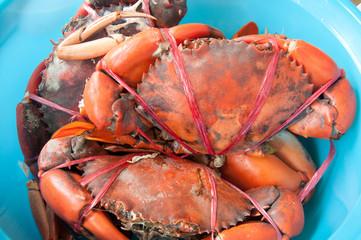 many crab