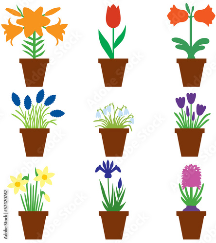 Set bulbs flowers in pots