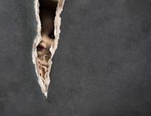 La série Dark - poupée fantasmagorique de cru