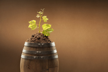 Botte Vino Con vite