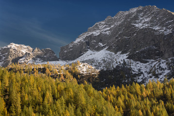 pines on mountain in autumn season