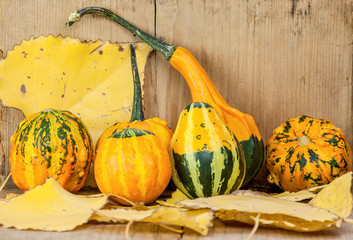 Gourds arrangement with autumn leaves