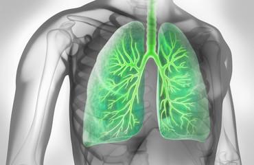 Lunge mit Bronchien in grauem Umfeld 2