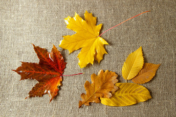 autumn leaves on the background.