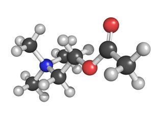 Acetylcholine (ACh) neurotransmitter, molecular model