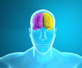 Cervello come funziona