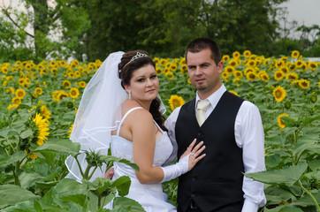 wedding couple in a sunflower field