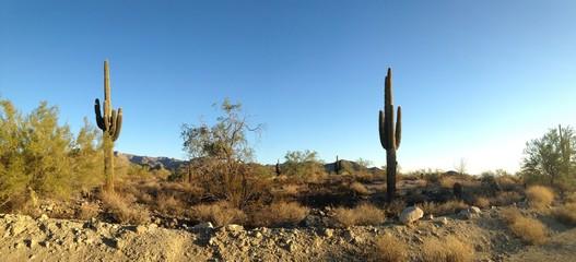 Phoenix Arizona