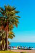 canvas print picture - Palmen am Strand