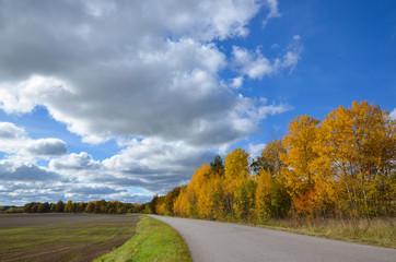 Roadside aspens at fall