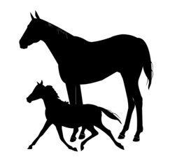 mare and her colt in silhouette