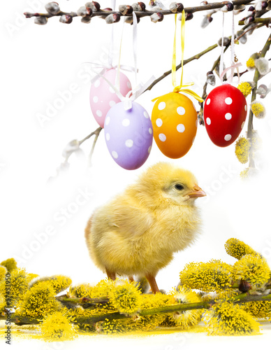 easter chicken and eggs on a spring branch