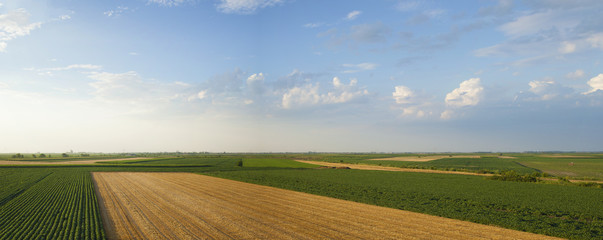 Summer crops panorama with soybean, wheat and corn fields.