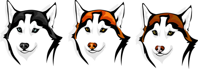 husky - wolf