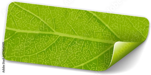 Label green leaf