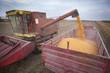 Harvester unloading corn