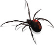 Black Widow Vector - 57464331
