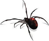 Black Widow Vector