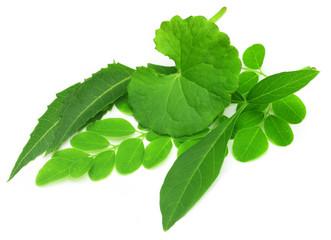 Medicinal herbs (thankuni, neem, nishinda, moringa)