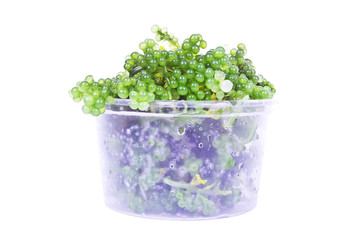 Oval sea grapes seaweed