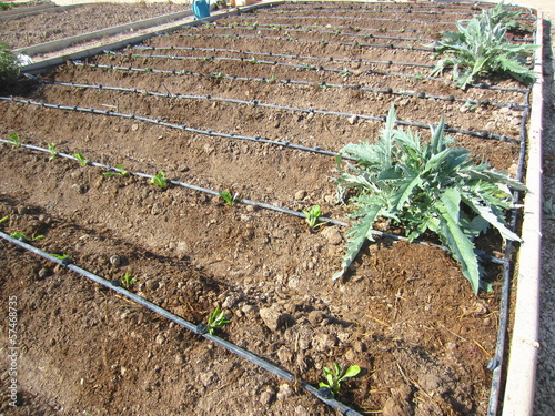 drip irrigation in allotment - 57468735
