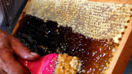 Honeycomb full of honey