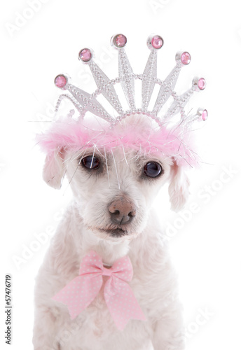 Pampered Princess Pet Dog