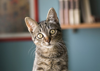 Cat with head tilted