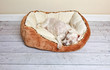 Dog sleeping in a dog pet bed