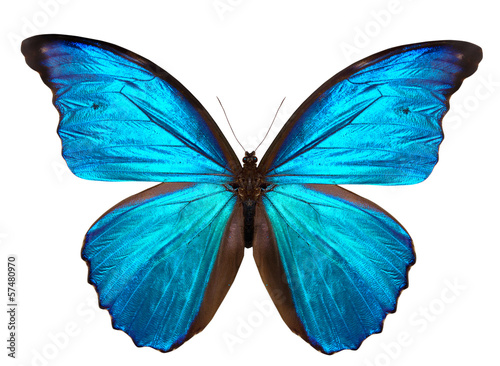 beautiful butterfly isolated on white - 57480970