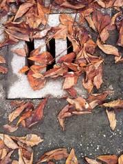 fogna con foglie