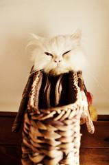 Kitten in a purse