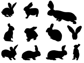 Easter bunny set illustrated on white