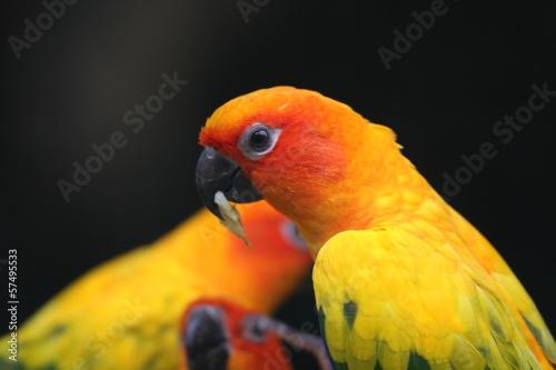 Papugi egzotyczne
