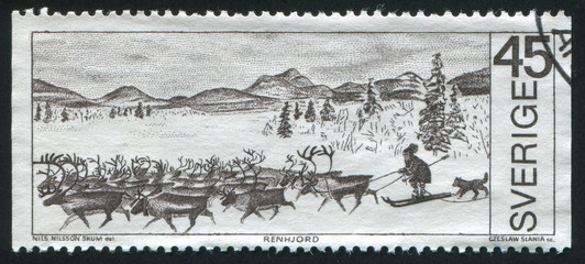 Reindeer herd and herdsman