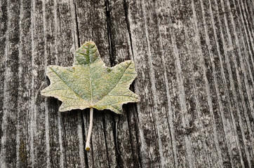 Leaf on a wooden background