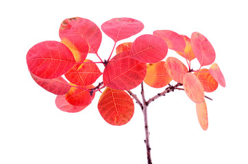 Colorful autumn leaves isolated on a white background