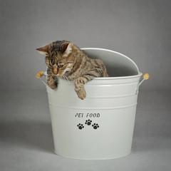chat dans seau à croquettes