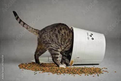 Spoed canvasdoek 2cm dik Kat chat volant dans seau à croquettes
