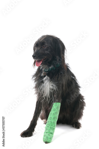 Dog with broken leg