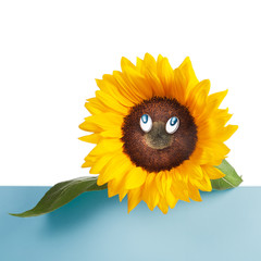 Sunflower with Eyes