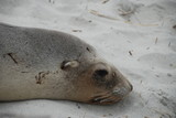 Seal looking sad