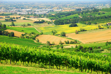 Italy, Romagna Apennines hills and vineyards