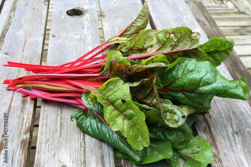 Green and red colored swiss chard in a garden