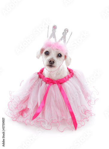 poster of Pampered Pooch in pretty tulle dress