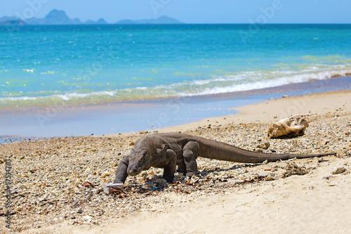 Fotobehang Koraalriffen Komodo Dragon