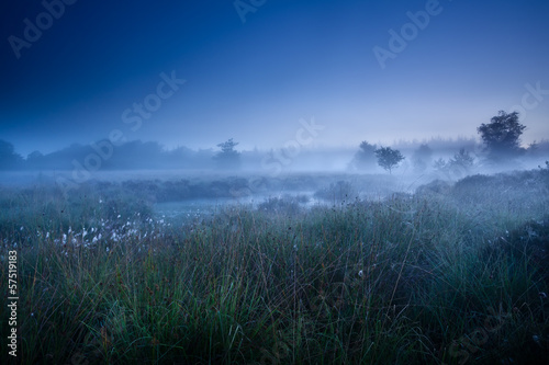 misty morning dusk over swamp