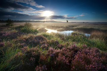 morning sunshine over swamp with heather