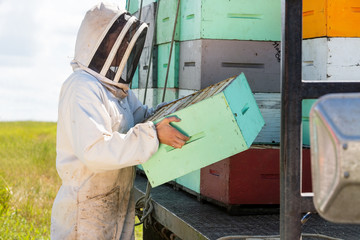 Beekeeper Carrying Honeycomb Crate At Apiary